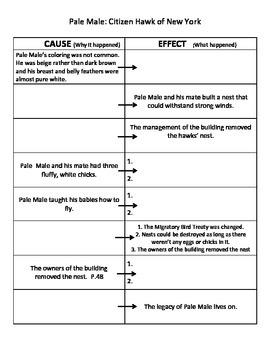ReadyGen  grade 5 Unit 1B. Pale Male:  Citizen Hawk Cause and Effect