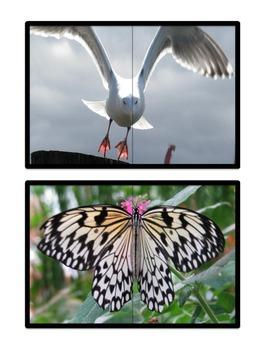 Real Animal Photograph Matching Halves Set 1