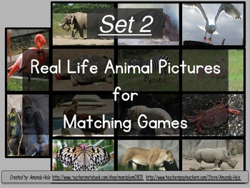 Real Animal Photograph Matching Set 2