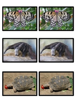 Real Animal Photograph Matching Set s 1 & 2