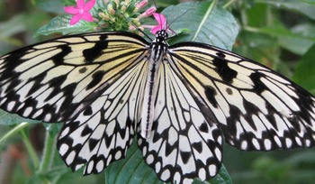 Real Butterfly Photos