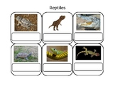 Real Life Vocabulary-Reptiles