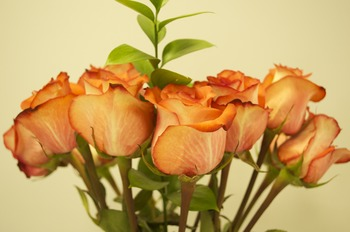 Real Photo Clipart-Roses