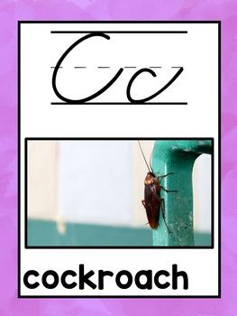 Real Photo Cursive Alphabet Posters