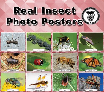 Insect Bug Vocabulary Posters & Cards