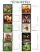 Real Photograph File Folders: Animals