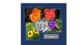 Real Photos: Flowers