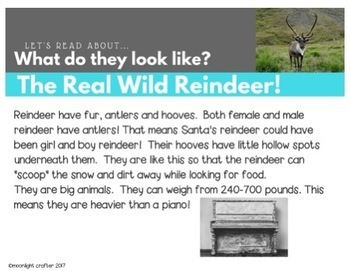 Real Reindeer: A Non-Fiction Unit