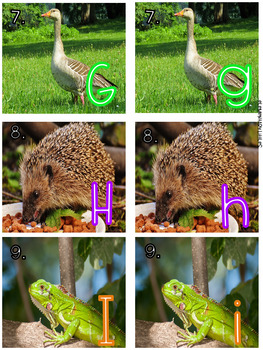 Real World Animal Alphabet with Task Cards