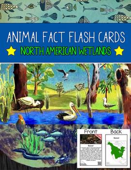 Realia Photo Animal Fact Flash Cards - North American Wetlands
