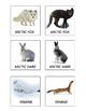 Realia Photo Animal Flash Cards - Arctic Animals
