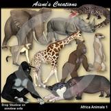 Africa Animals 1