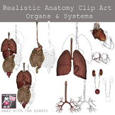 Realistic Anatomy Clip Art - Human Body Organs and System