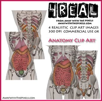 Realistic Anatomy Clip Art - Internal Organs (4 Real! Clipart)