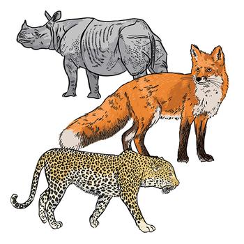 Realistic Animal Clip Art by See School Shop | Teachers ...