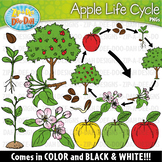 Realistic Apple Life Cycle Clipart {Zip-A-Dee-Doo-Dah Designs}