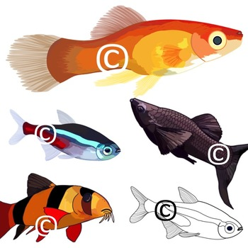 Realistic Fish Clip Art Illustrations