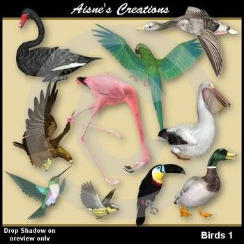 3D Birds 1