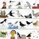 Realistic Birds Packet clip art