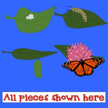 Realistic Butterfly Life Cycle Clipart