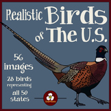Birds Clip Art - Realistic Birds of the United States