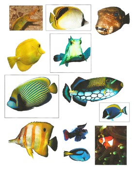 Realistic Commercial Clip Art: Coral Reef Fish