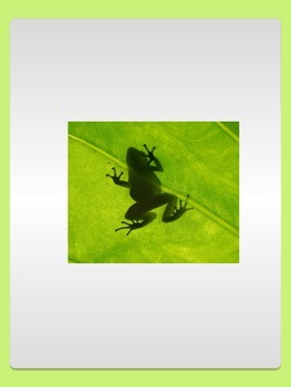 Realistic Commercial Clipart : Rainforest Frogs