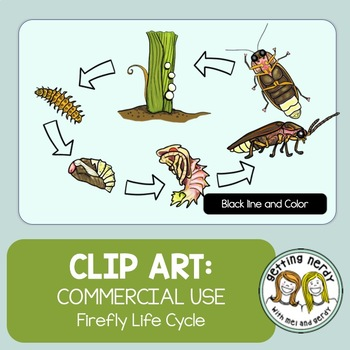 firefly life cycle firefly life cycle