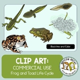 Frog Life Cycle - Clip Art