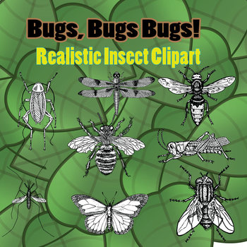 Realistic Insect Clipart - White fill and black lines - Commercial Use OK!