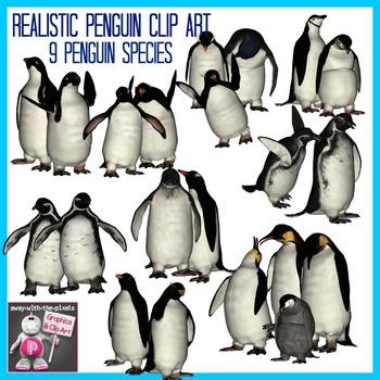 Realistic Penguins Clip Art Images  - 9 Penguin Species