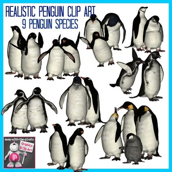 Realistic Penguins Clip Art Images  - 9 Penguin Species