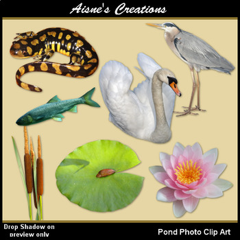 Pond Life Real Photo Clip Art