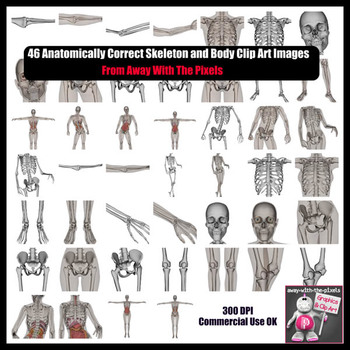 Realistic Skeleton and Organs Parts of the Body Clip Art