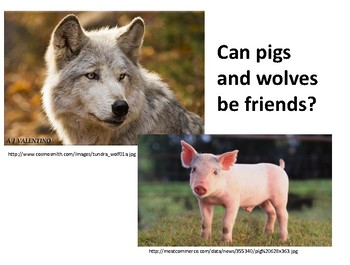 Realistic Wolves and Pigs