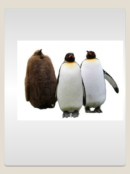 Realsitic Penguin Commercial Clip Art