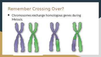 Recombination Frequency and Gene Mapping - AP Biology