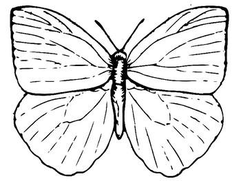 Recycled Butterflies: Classroom Engineering Design Challenge ~ STEM