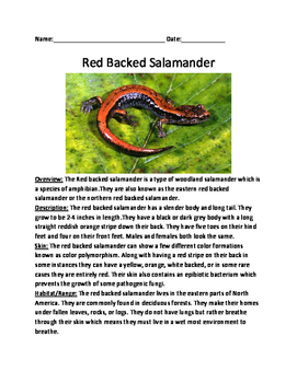 Red Backed Salamander - Informational article facts questions lesson word search