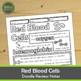 Red Blood Cells Middle School Biology Doodle Notes