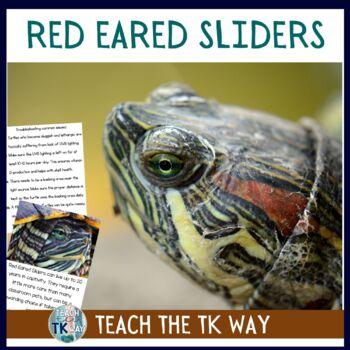 Classroom Pet Red Eared Slider