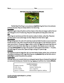 Red Eye Tree Frog - Info Facts Review Questions Vocabulary