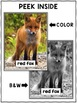 Red Fox Close Reading Passage Activities