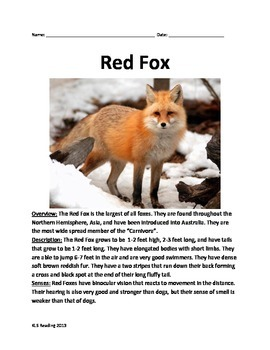 Red Fox - Informational Article Questions Facts Vocabulary
