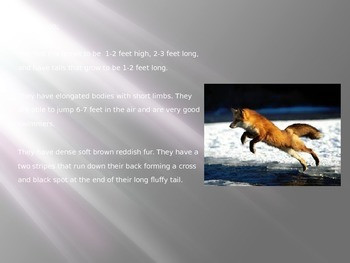 Red Fox - Power Point information facts pictures