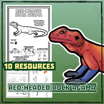 Red-Headed Rock Agama -- 10 Resources -- Coloring Pages, Reading & Activities