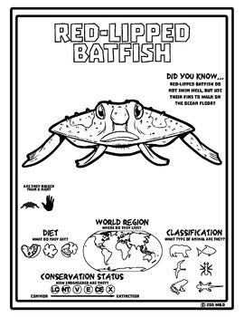 Red-Lipped Batfish -- 10 Resources -- Coloring Pages, Reading & Activities