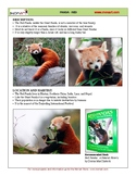 Red Panda Drawing Project
