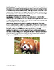 Red Panda - informational article lesson facts questions vocab word search