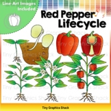 Red Pepper Lifecycle Clip Art